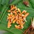 5 resep tanaman kunir untuk mengobati penyakit